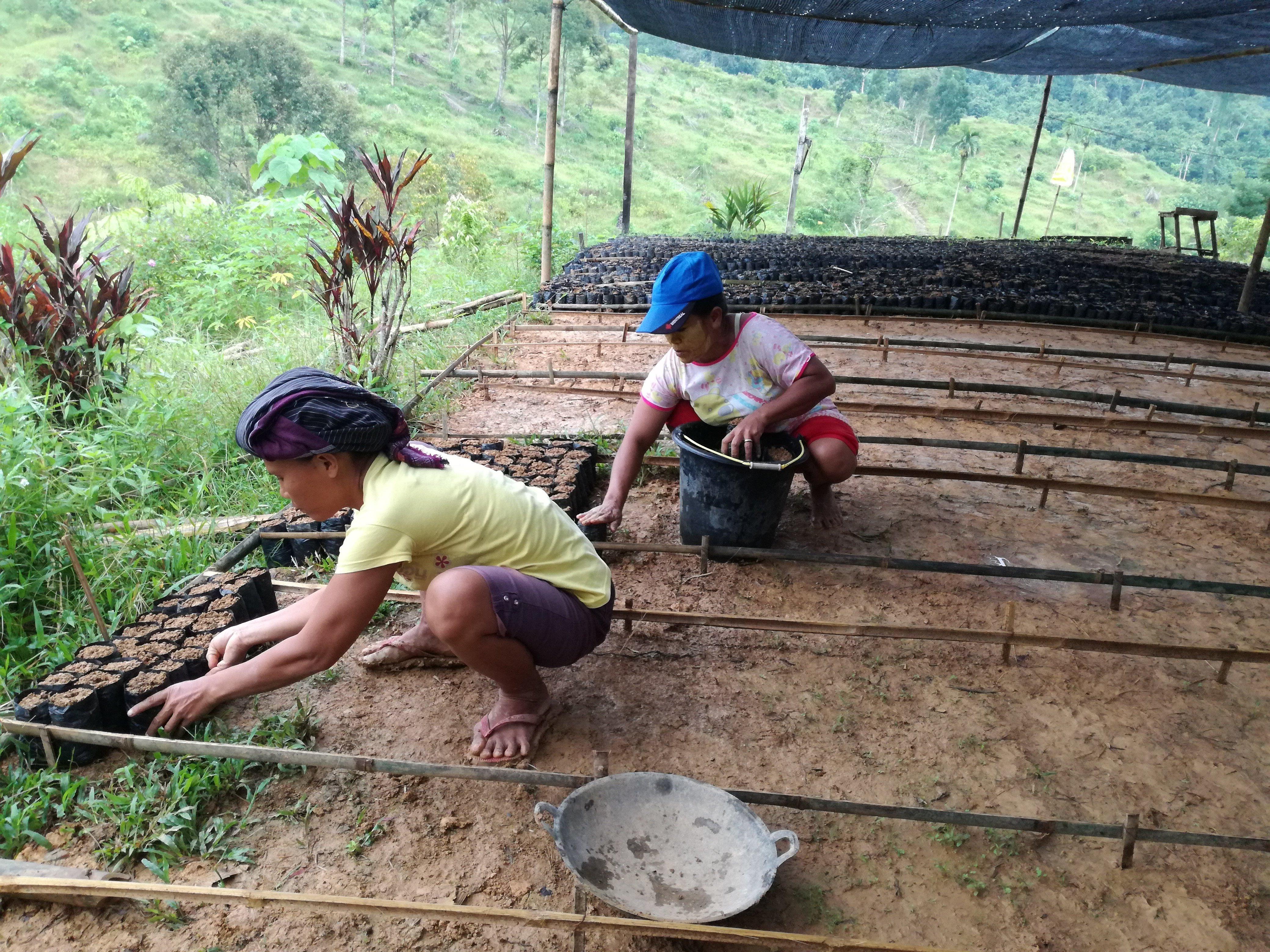 The Week of Seedling Production in Cinta Raja Restoration Site