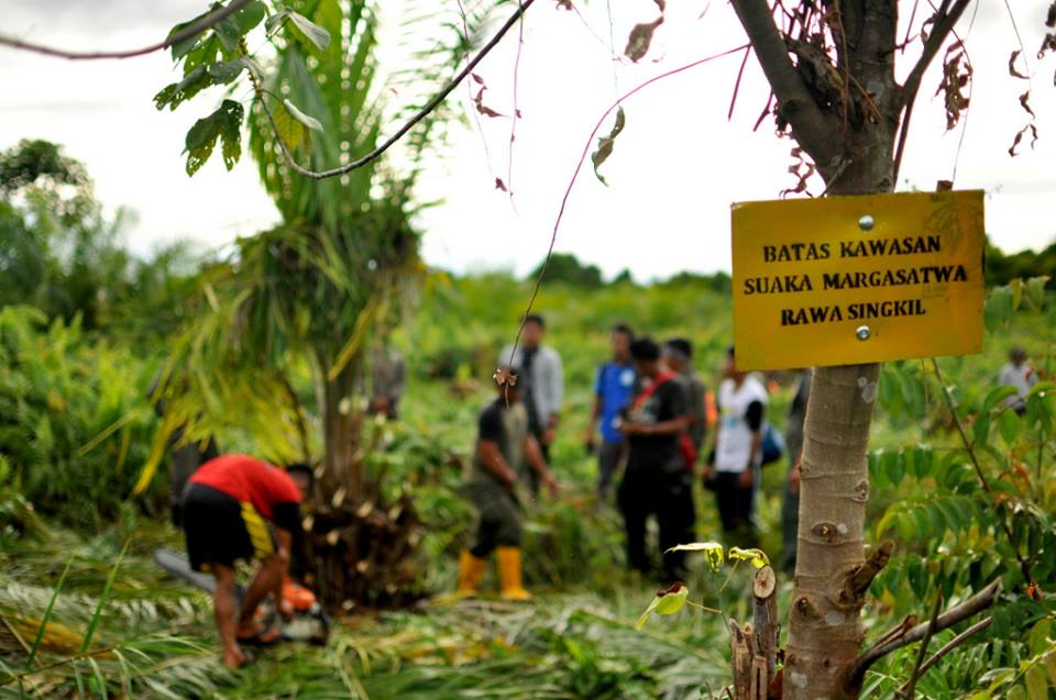 More Illegal Palm Oil Trees Down, Another Rain Forest Reborn