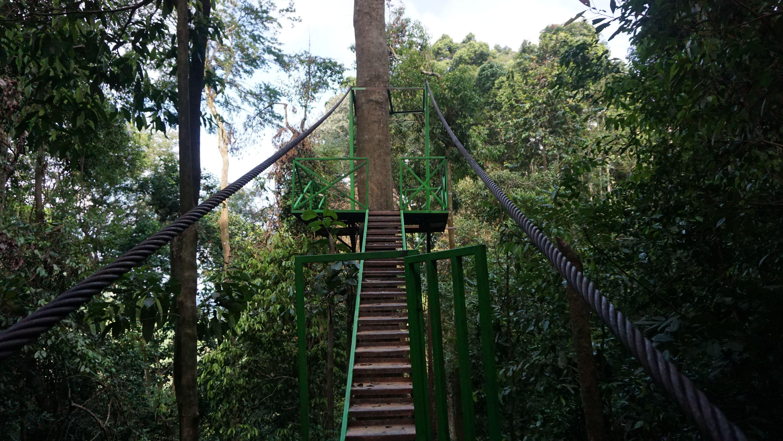 New Canopy Trail in Bukit Lawang Orangutan Viewing Centre