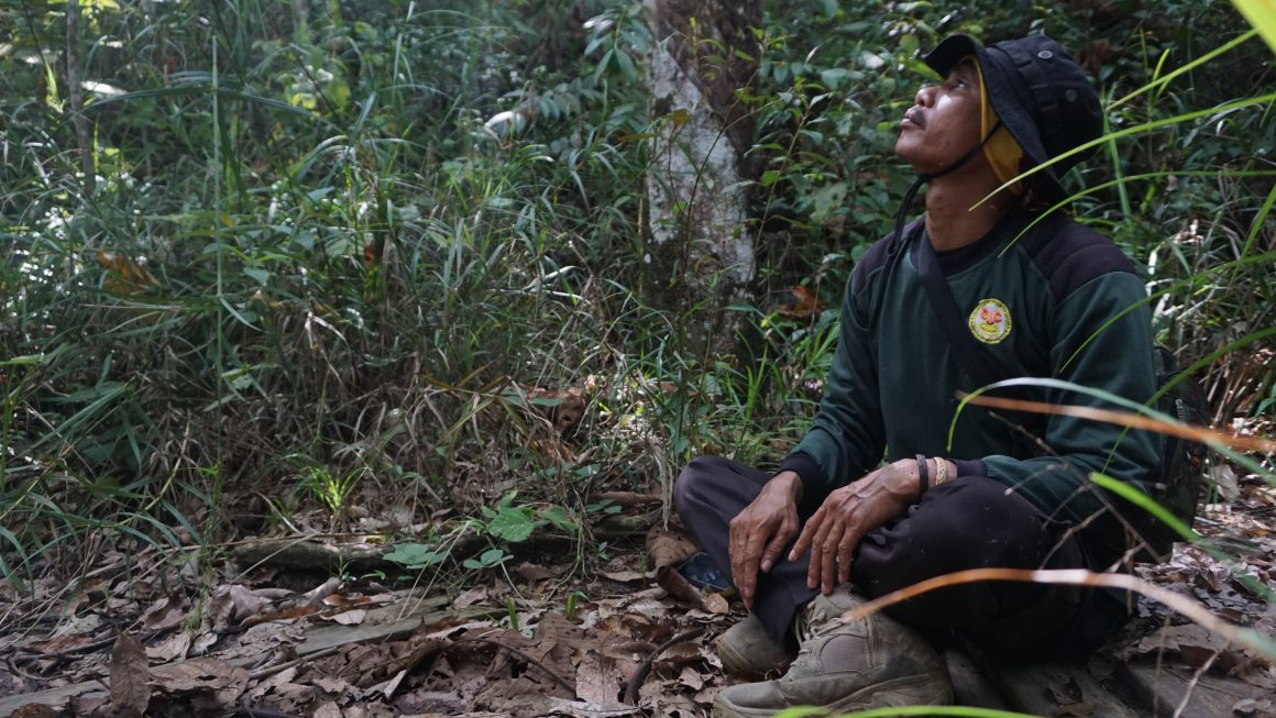 Isolated Orangutan Monitoring