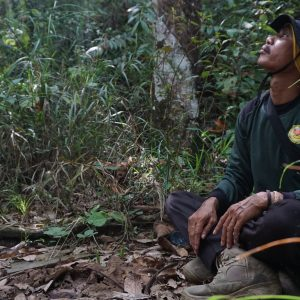 Isolated Orangutan Monitoring