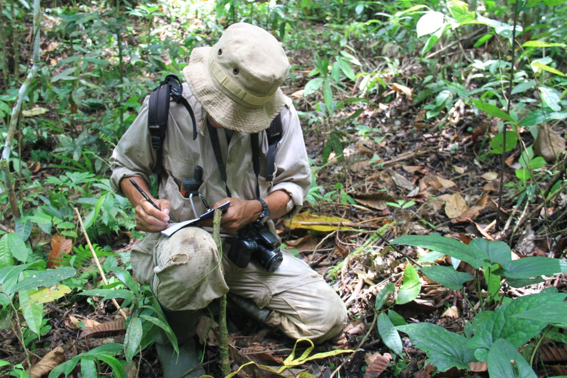 Wildlife Monitoring in Cinta Raja Restoration Site