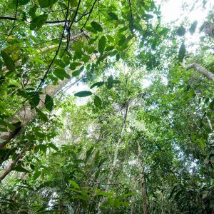 Good news for Indonesia's primary forests!