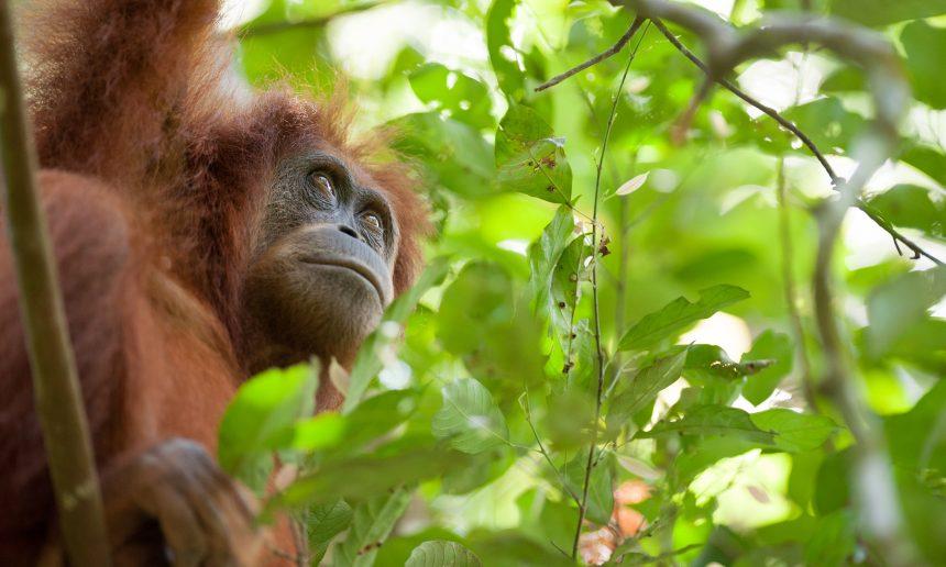Conservation Optimism