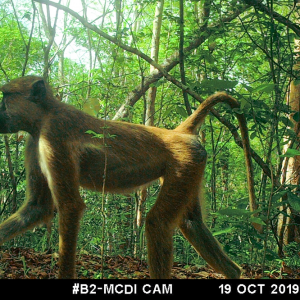 Trapping wildlife… with cameras!