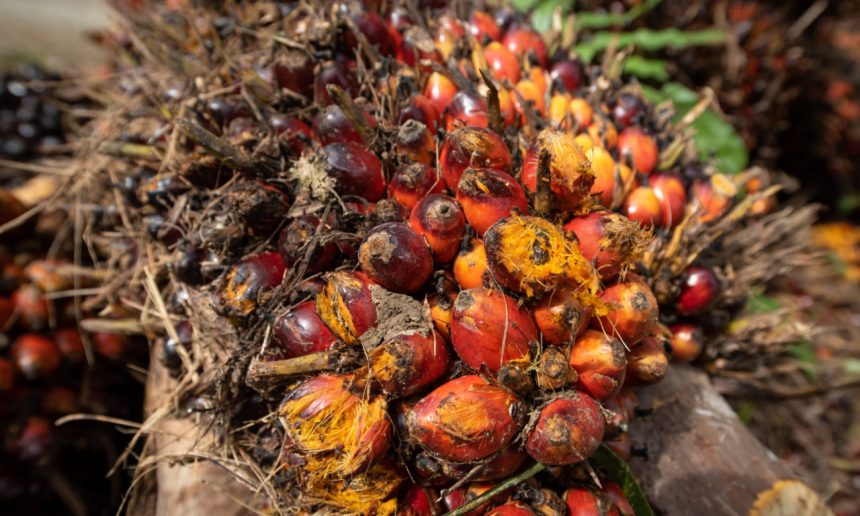 Perspectives on palm oil