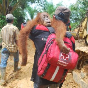 Help the orangutan rescue team!