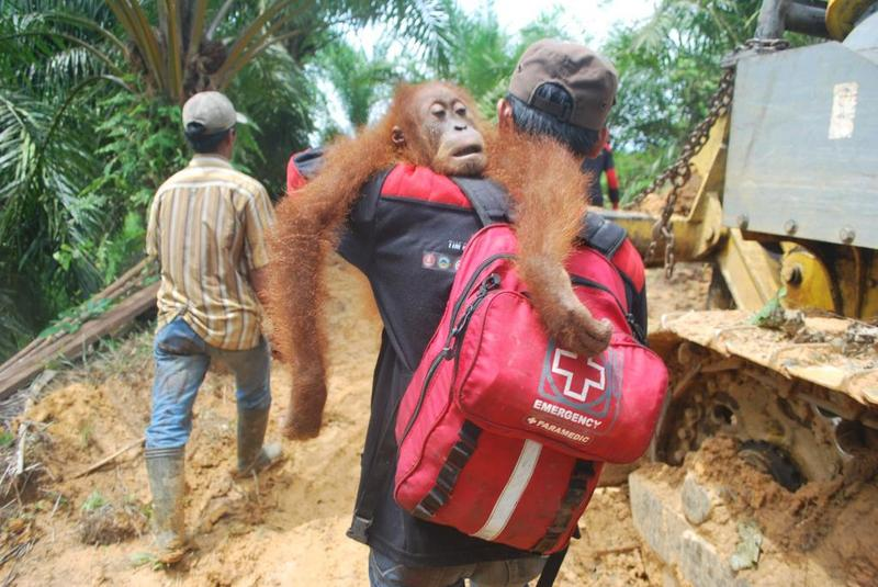 Help the orangutan rescue team!